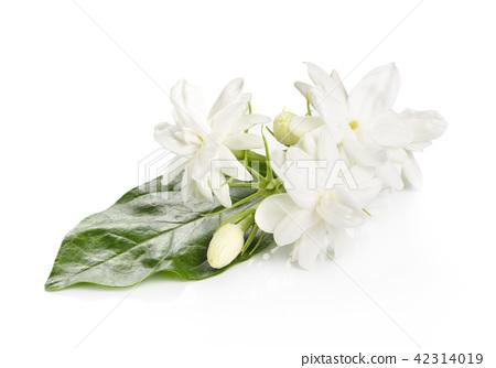 Jasmine flower over white background 42314019