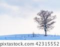 landscape, scenery, scenic 42315552