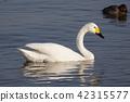 들새, 야조, 물새 42315577