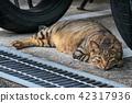 สัตว์,ภาพวาดมือ สัตว์,แมว 42317936