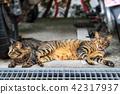 สัตว์,ภาพวาดมือ สัตว์,แมว 42317937