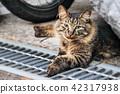 สัตว์,ภาพวาดมือ สัตว์,แมว 42317938