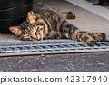 สัตว์,ภาพวาดมือ สัตว์,แมว 42317940