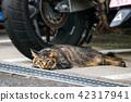 สัตว์,ภาพวาดมือ สัตว์,แมว 42317941
