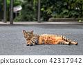 สัตว์,ภาพวาดมือ สัตว์,แมว 42317942