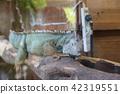동물원 42319551