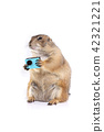 Prairie dog holding blue action camera in hands. 42321221