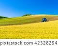 """""""ฮอกไกโด"""" Biei ·ภูมิทัศน์ในชนบทและรถฟาร์ม 42328294"""