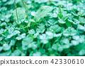 树叶 叶子 绿色 42330610