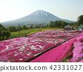Kutchan的Shubazakura和Yotei山 42331027