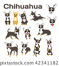 chihuahua,dog in action,happy dog 42341182