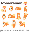 pomeranian,dog in action 42341190