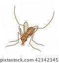 注意蚊子淡色庫蚊吸吮血液科比長鰭金槍魚 42342345