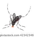 當心蚊子白紋伊蚊吸血 42342346