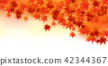 maple, yellow, leafe 42344367