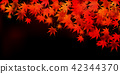 maple, yellow, leafe 42344370