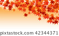 maple, yellow, leafe 42344371