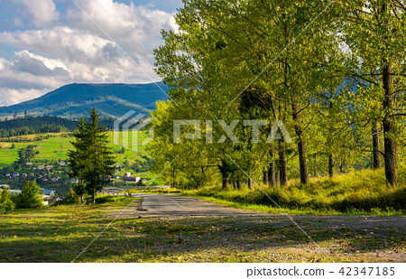 row of trees along the road in to the mountains 42347185