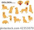 golden retriever,dog in action,happy dog 42353070