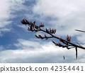 푸른 하늘에 뉴사이란 오렌지 꽃 42354441