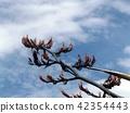 푸른 하늘에 뉴사이란 오렌지 꽃 42354443