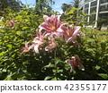 花朵 花 花卉 42355177
