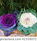 新年材料·Kadomatsu Peony明亮的葉子兩種顏色·方形 42356072