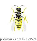 ตัวต่อ,แมลง,ต่อ 42359576
