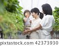 草莓家庭 42373930