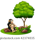 animal, ape, chimp 42374035