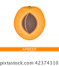 apricot, fruit, vector 42374310