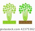 celery plant 42375362