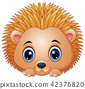 Cute baby hedgehog isolated on a white background 42376820