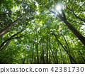 ป่าแห่ง Jukai 42381730