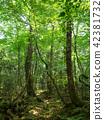 ป่าแห่ง Jukai 42381732