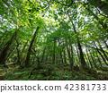 ป่าแห่ง Jukai 42381733