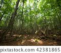 수해의 숲 42381865