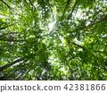 ป่าแห่ง Jukai 42381866
