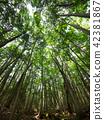 ป่าแห่ง Jukai 42381867
