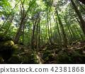 ป่าแห่ง Jukai 42381868