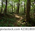 ป่าแห่ง Jukai 42381869