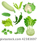Flat vector set of organic green vegetables. Fresh and healthy ingredients for vegetarian dishes 42383697