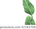tropical palm leaves on white background 42383706
