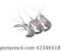 Giant freshwater prawn, Fresh shrimp isolate 42386418