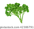 Parsley isolated on white background 42386791