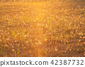 Meadow in the light of the setting sun 42387732