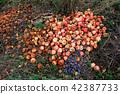 Waste from autumn harvest 42387733