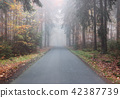 Empty asphalt road by an autumn forest 42387739
