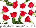 กุหลาบ,ดอกกุหลาบ,สีแดง 42390114