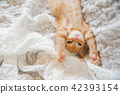 一隻小貓 42393154
